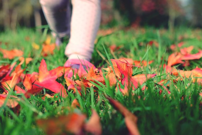 Nature Autumn Leaf Grass Low Section Selective Focus Growth Beauty In Nature Outdoors One Person Human Leg Human Body Part Real People Day Maple Leaf Close-up Fragility People
