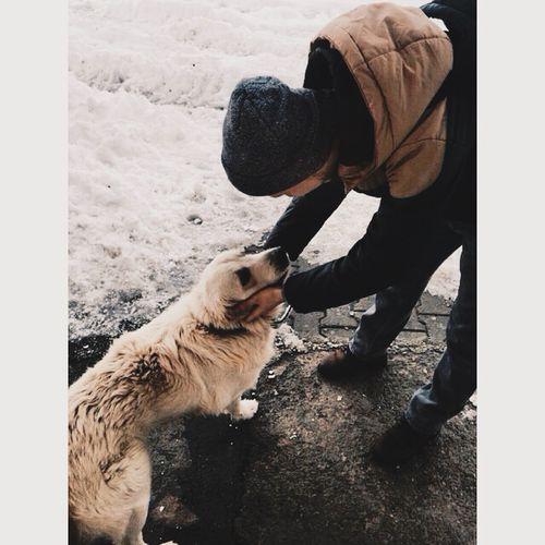 Dog Golden My Friend Pet