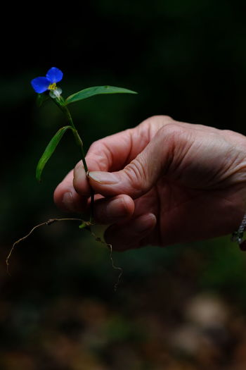 Close-up of hand holding flower outdoors