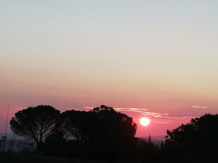 Toscana Tree Tree Area Sunset Forest Silhouette Astronomy Sky