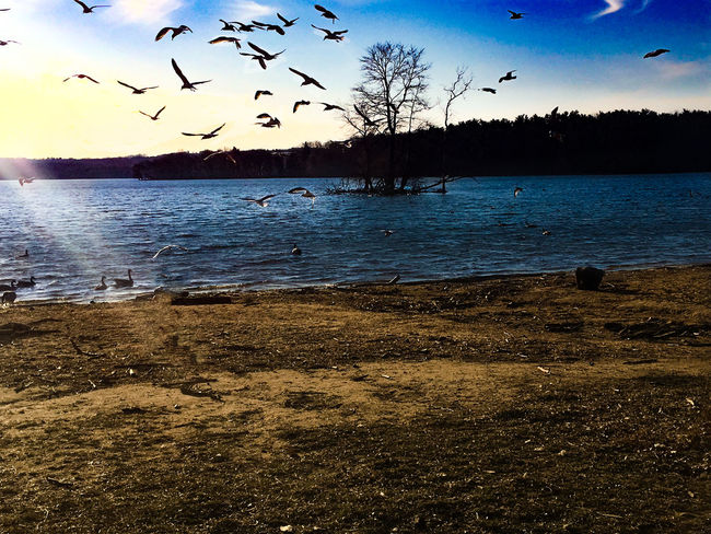 Animals In The Wild Beauty In Nature EyeEm Nature Lover Flock Of Birds Landscape Nature Shore Tranquil Scene Water Water_collection
