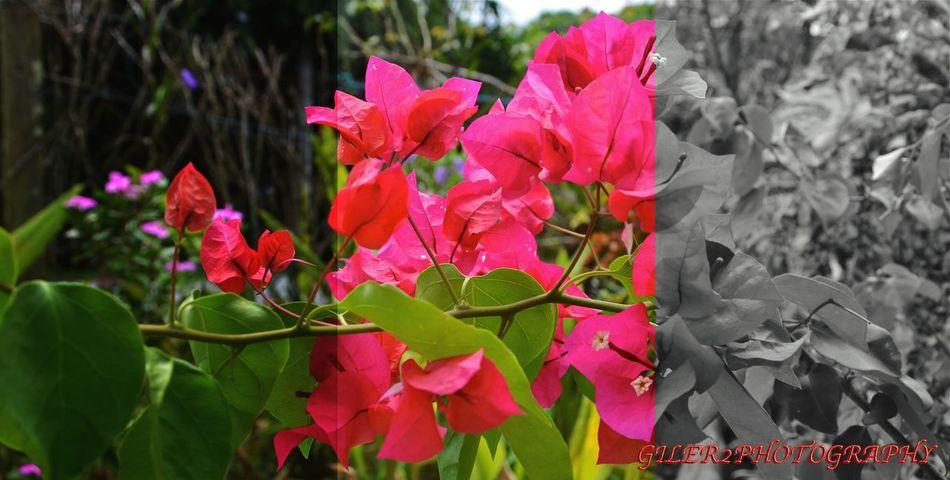 Bunga Kertas Photorealism Natural Beauty