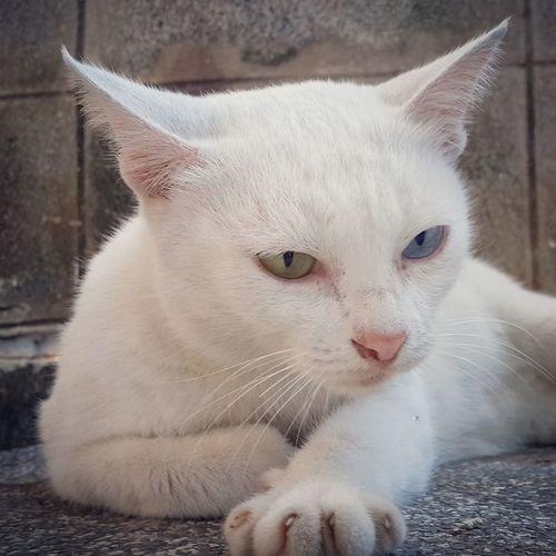 Cat My Cat I Love My Cat Cat Lovers I Love Cats แมว Samsung Galaxy S4