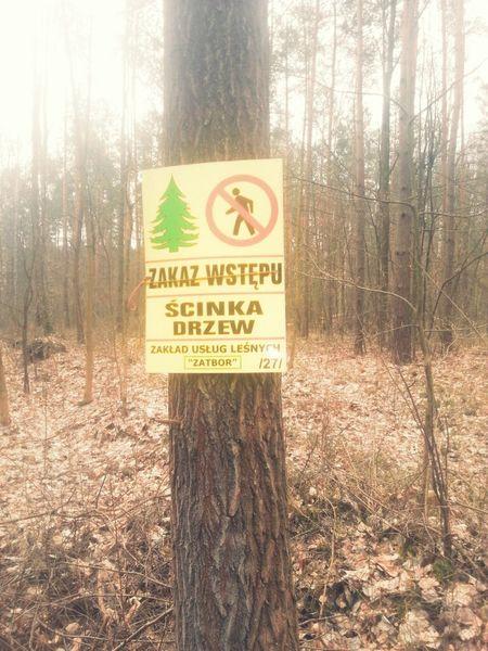 Zakaz 🚫 Wstępu Wchodzę Las Wycinka Drzew Biegam