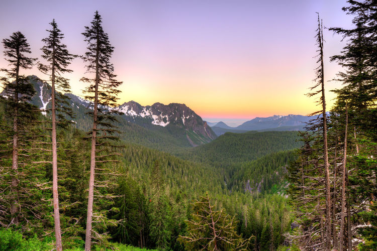 Panoramic view of Mount Rainier National Park, Washington State, USA Mount Rainier Mount Rainier National Park Nature Pine Scenic Trees USA Washinton State Cascades Mountains Forest Landscape Mountain Range Sunrise Sunset