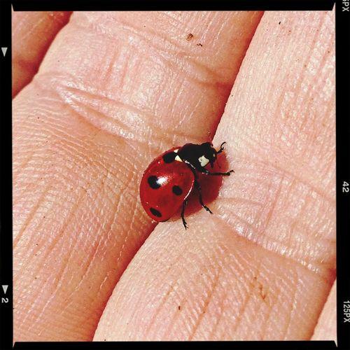 Nature Ladybug