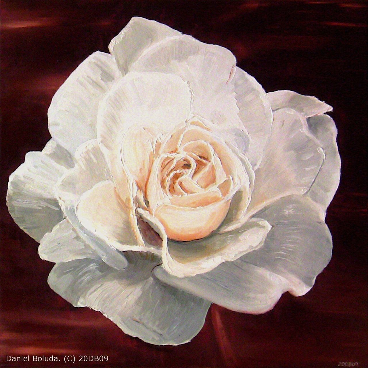 CLOSE-UP OF ROSE OVER WHITE BACKGROUND