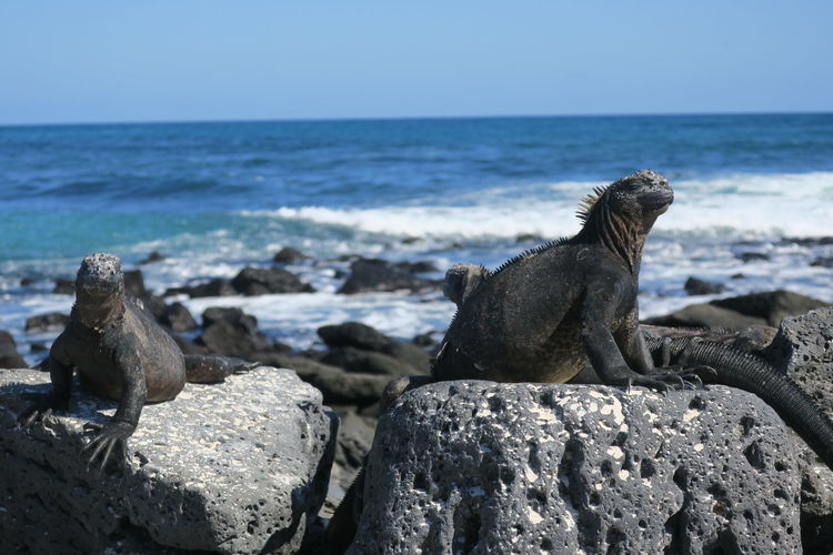 View of lizard on rock at beach against sky