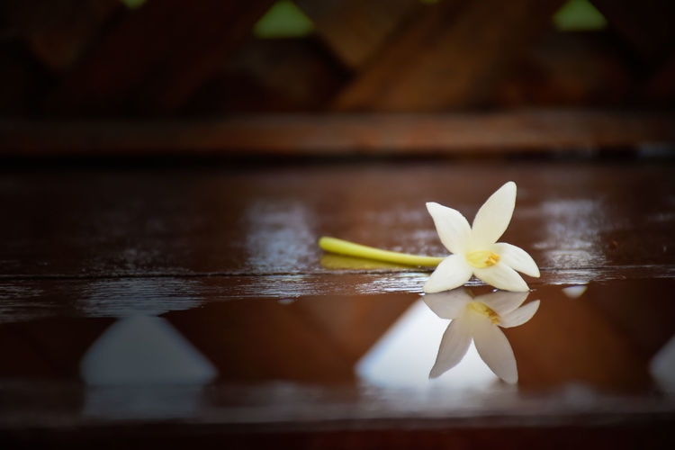 Close-up of water lily on wood