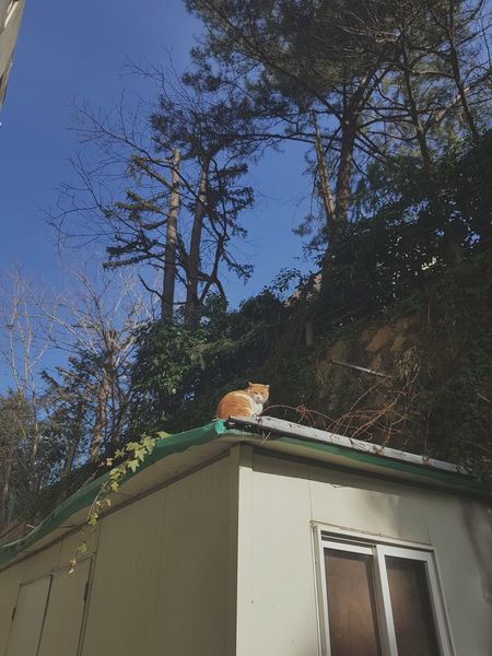 Cat Tree Day No People Sky Roof Architecture Built Structure Nature Outdoors