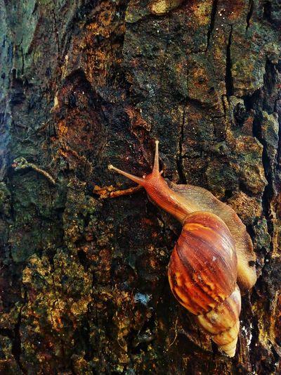 Snail Snail Photography Snail On The Tree Snail On Tree Animal Nature Animal Themes Animal One Animal Nature