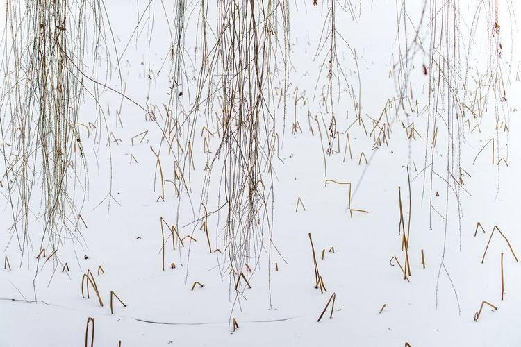 lines Crying Nature Lake Leafs Lines Nature Structures & Lines Winter Lake Wintertrees