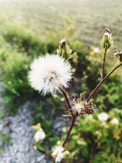 Little bug Flowers, Nature And Beauty EyeEm Tiny Bug Plant Flower Flowering Plant Fragility Beauty In Nature Freshness Vulnerability  Close-up Nature Flower Head Animals In The Wild Outdoors No People White Color Day