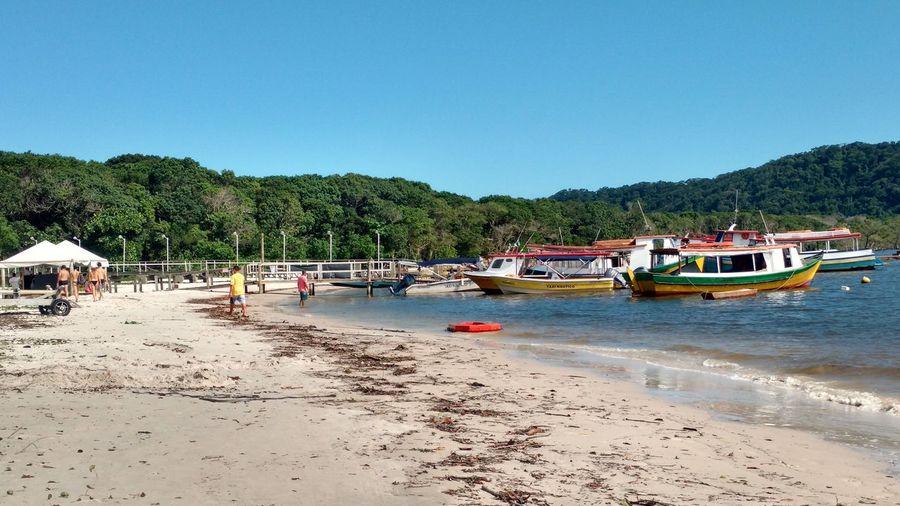 Trapiche, Ilha