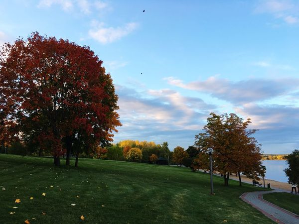 Tree Nature Beauty In Nature Sky Tranquility Tranquil Scene Grass Cloud - Sky Scenics Growth Autumn Landscape No People Outdoors Day Golf Course