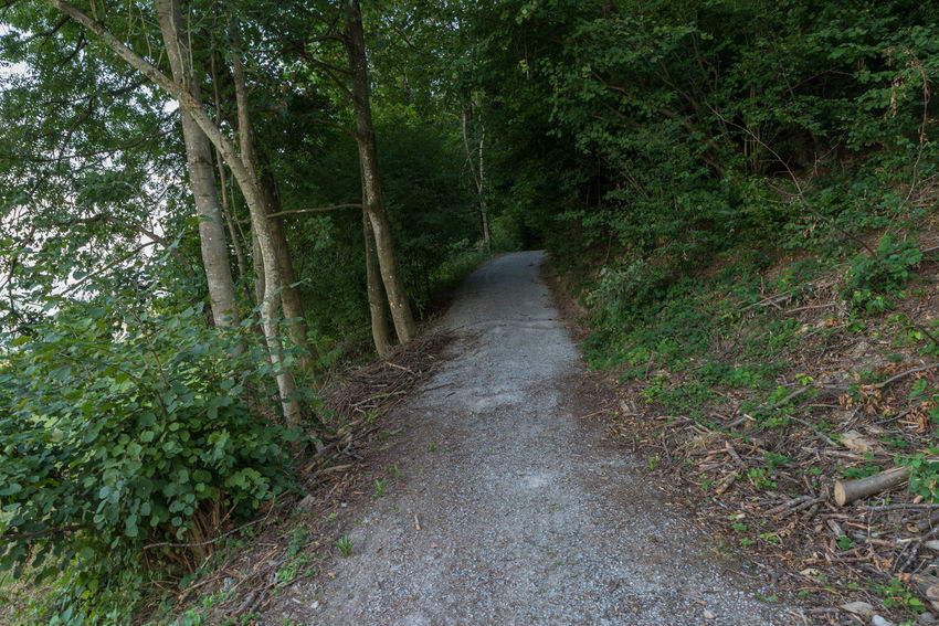 Zürichseerundweg Hiking Trail Waldweg Wanderweg Beauty In Nature Day Direction Forest Forest Track Fußweg Green Color Growth Land Nature No People Non-urban Scene Outdoors Plant Scenics - Nature Switzerland The Way Forward Track Trail Tranquil Scene Tranquility Tree WoodLand