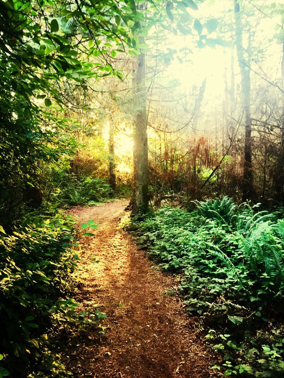 plant, forest, tree, land, tranquility, direction, footpath, the way forward, nature, beauty in nature, growth, tranquil scene, no people, green color, day, sunlight, non-urban scene, scenics - nature, woodland, outdoors, trail