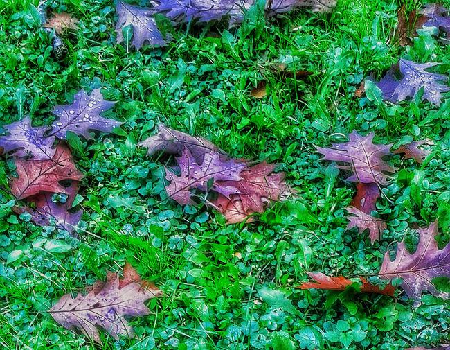 Autumn Autumn Colors Autumn Leaves Colors Colors Of Autumn Fall Fall Beauty Fall Colors Fall Leaves Fallen Leaves Green Ground Leaf Leaving Nature Nature Plant Rain Raindrops Season  Seasons First Eyeem Photo Showcase: November