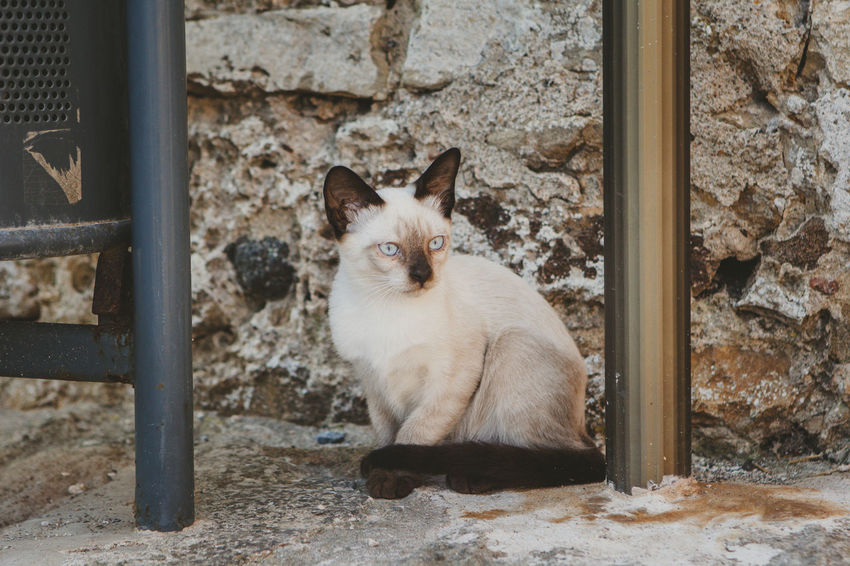 Cat Day Domestic Domestic Animals Domestic Cat Feline Full Length Looking At Camera Mammal No People One Animal Outdoors Pets Portrait Sitting Vertebrate Wall - Building Feature Whisker