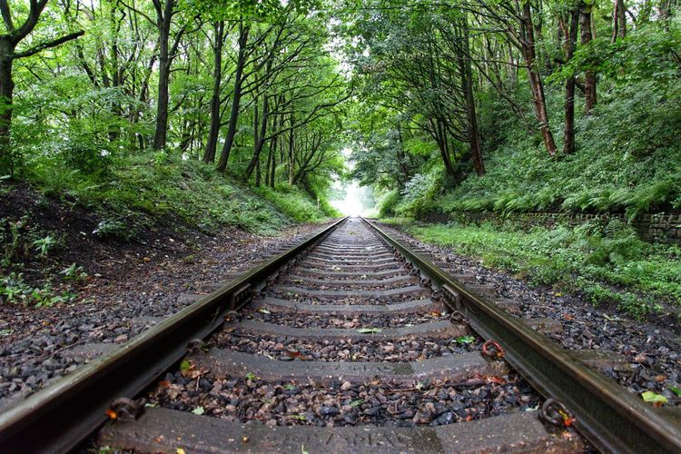 View of railroad tracks amidst trees in forest