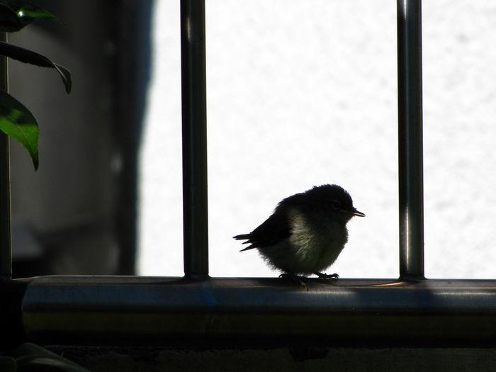 Bird perching on window