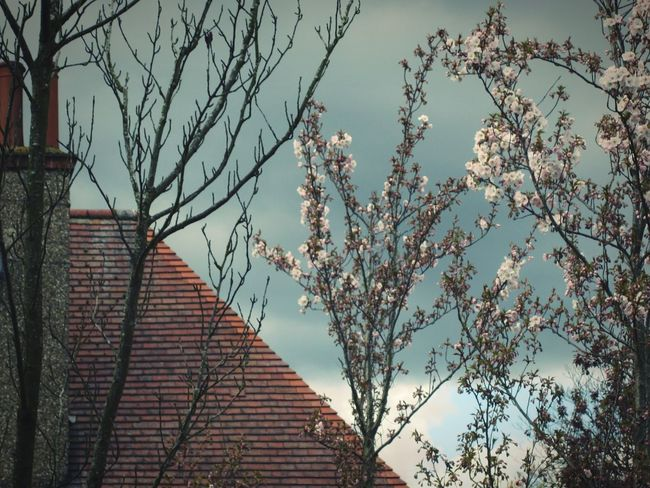 ◽ a hint of spring◽ Blooming Blossom Trees Trees And Sky EyeEm Nature Lover Minimal Landscape Urban Photography Angles And Lines Sky_collection Urban Geometry Minimalist Architecture_collection Learn & Shoot: Simplicity Pastel Blue April 2016 Telling Stories Differently