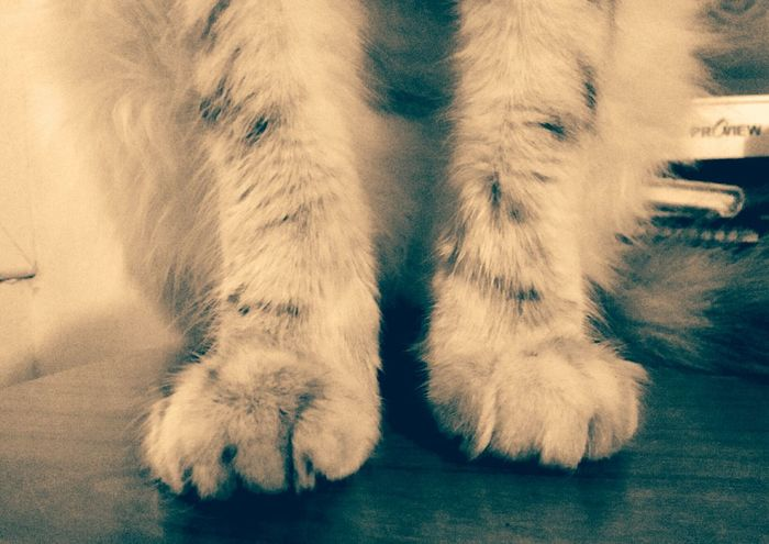 Las patas de la gata Nina. Low Section Indoors  Human Leg Close-up Human Body Part Day Mammal People Gata🐱 Cats Of EyeEm Gats :)) Feline Animal Themes One Animal Domestic Animals Domestic Cat Patas Mascotas 🐶 Gatti Domestici Patas_peludas Patas De Gato Patas