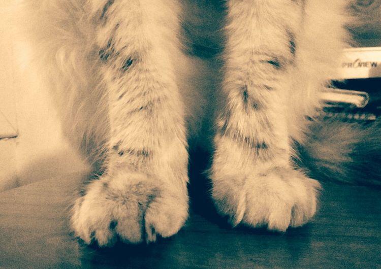 Las patas de la gata Nina. Low Section Indoors  Human Leg Close-up Human Body Part Day Mammal People Gata🐱 Cats Of EyeEm Gats :)) Feline Animal Themes One Animal Domestic Animals Domestic Cat Patas Mascotas 🐶 Gatti Domestici Patas_peludas Patas De Gato Patas