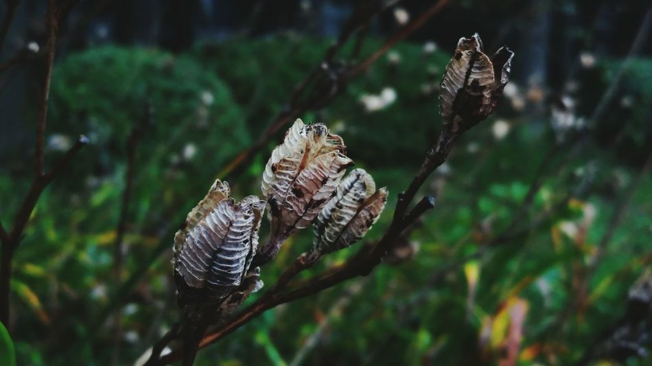 Plants Collection Nature Beauty In Nature Seed Capsule Dead Plant Weathered Tranquility Tranquil Scene