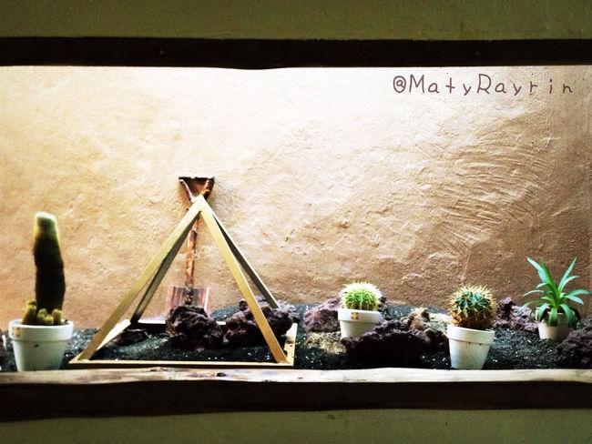 サボテン 仙人掌 Cactus