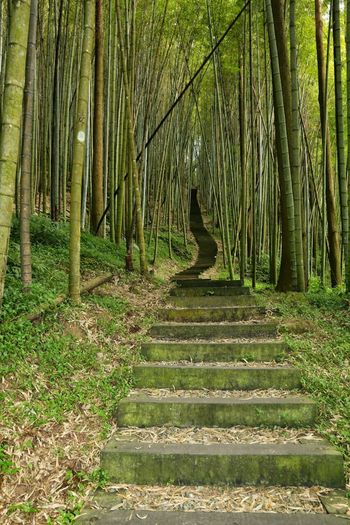 bamboo forest Forest Nature Tree Growth Outdoors Bamboo - Plant Bamboo Grove