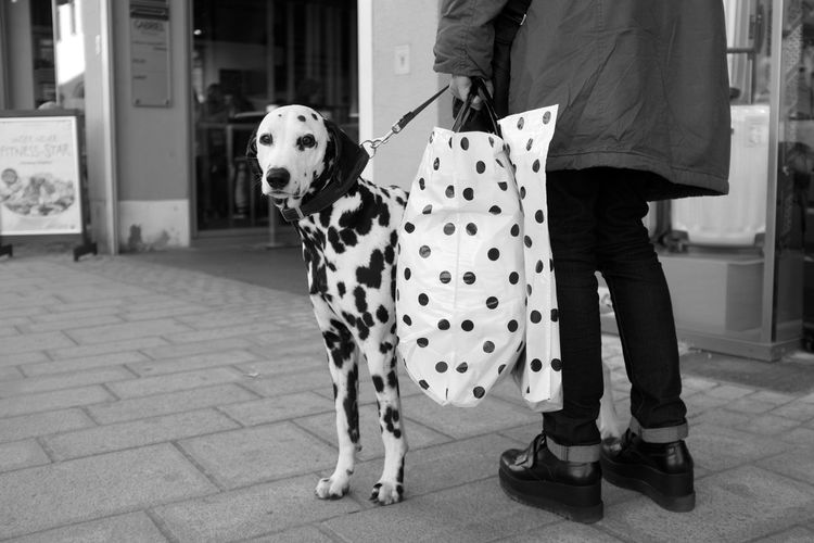 . Street, Dog, Hund, Straßenfotografie, Street Photography, Dalmatiner, Dalmatian, Candid, Black The Street Photographer - 2017 EyeEm Awards The Street Photographer - 2018 EyeEm Awards