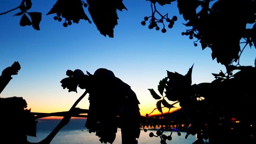 Silhouette Sunset Croatia Adriatic Riviera Omis Croatia Omis Beauty In Nature Travel Vacations Holiday Coast Adriatic Sea Adriatic Coast Water Sky