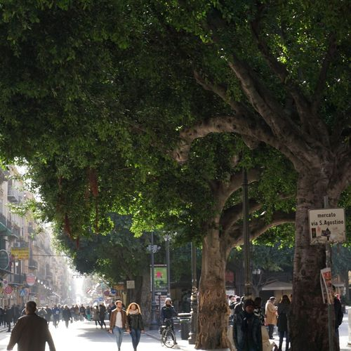 Streets of Palermo, Sicily, Italy. Via Maqueda. Palermo Italy Sicily Sonyalpha Sony Sony A6000 Photo Photographer Photography Street Streetphotography Travel Travel Destinations Vacations Vacation Old Buildings Tree Trees Green Green Color Via Maqueda People People Walking  Commercial Commercial Street