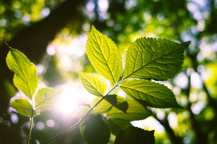 Close-up of leaves against bright sun