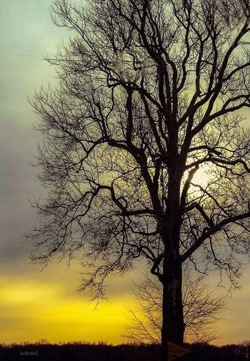 DreamCatcher Tree Tranquility Beauty In Nature Nature Silhouette Colour Your Horizn Landscape Sunset No People Sky Colour Your Horizn
