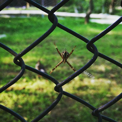 Signaturespider Zigzag Web Fourleggedspider Insect Photography First Eyeem Photo Spider Wildlife Wildlife & Nature Wild Wildlife Photography Insects  Nature Photography Nature