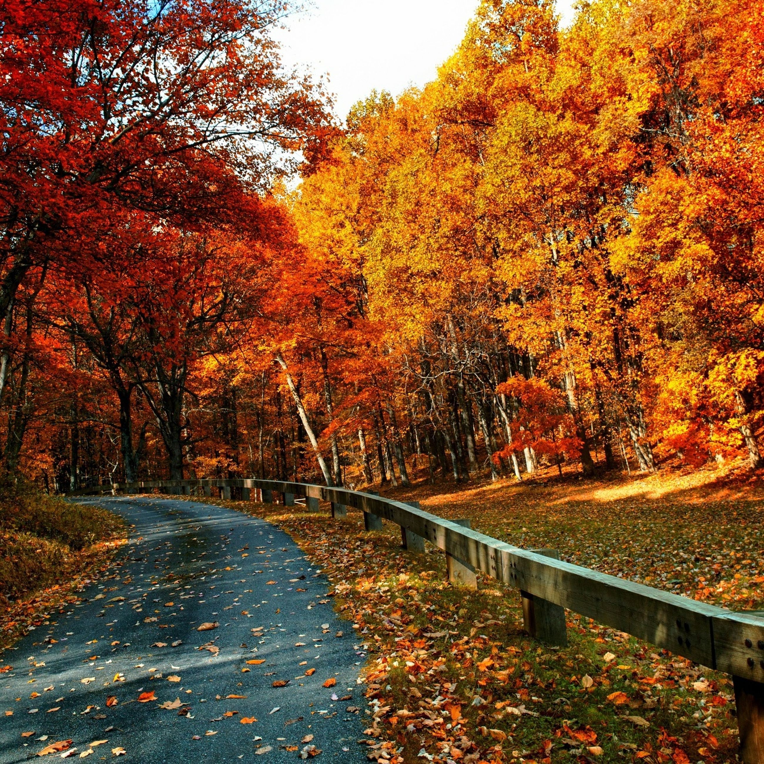 autumn, change, tree, season, the way forward, leaf, fallen, orange color, tranquility, nature, beauty in nature, transportation, diminishing perspective, growth, tranquil scene, road, yellow, scenics, branch, fall