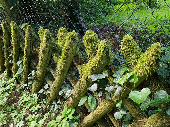 Full Frame No People Green Color Close-up Nature Beauty In Nature Mossy Fence Wooden Fencing Drahtzaun Rewilding Wilderness The Week On EyeEm Beauty In Nature Ladyphotographerofthemonth Nature Versus Manmade No Edit/no Filter Outdoors Nature Strong Nature Efeu Bewachsene Efeu EyeEm Ready