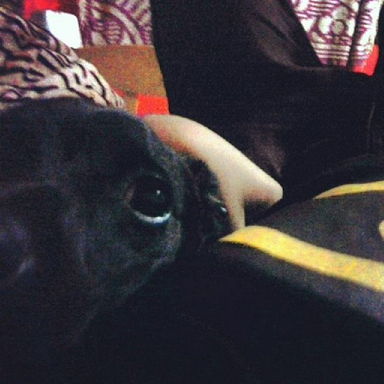 Deitado Cama Night My dog Millow like me batman i'amBatman cama brothers best friend true peace vibe instaboy instadog instavipss brazilian follow goodnight