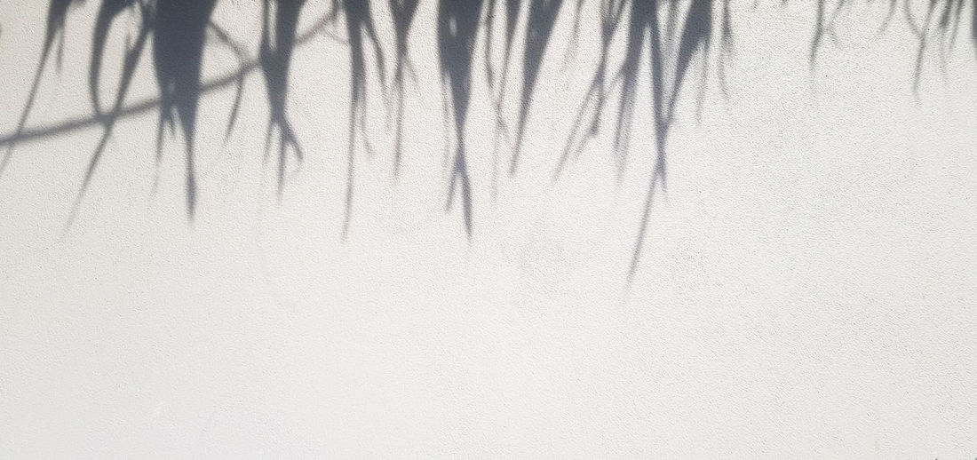 Close-up of shadow on wall