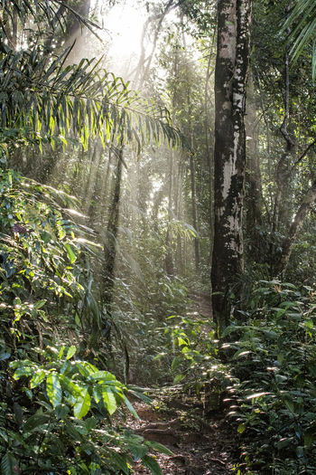 trail in amazonia Landscape_Collection Light Morning Light Nature Amazonian Forest Forest Photography Paradise Trail