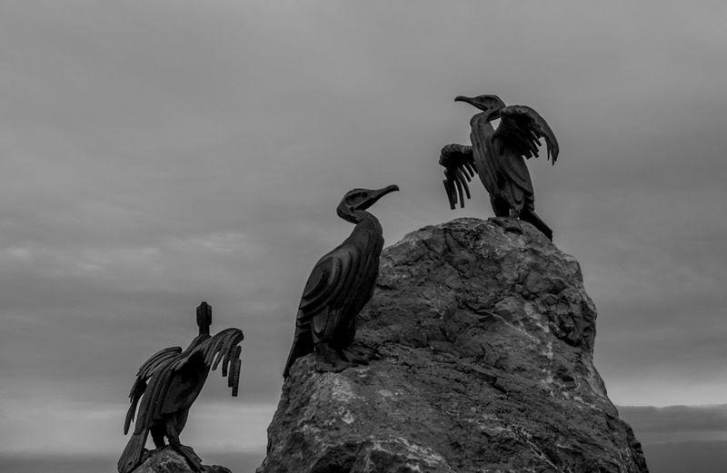Cormorants, Morecambe Pier Black And White Morecambe Birds Monochrome