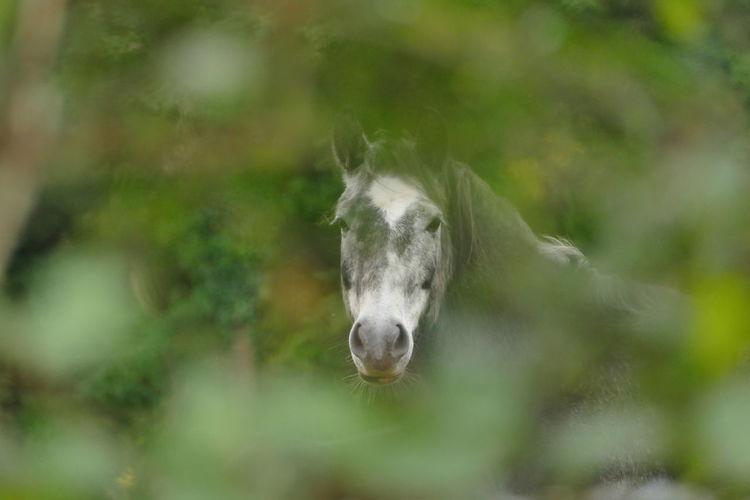 Horse seen through plants