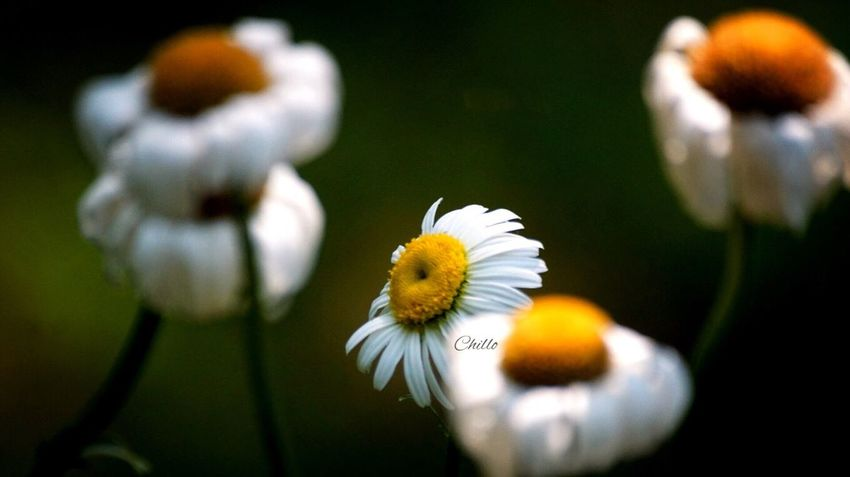 Reach for the sky. Flowers EyeEm Nature Lover EyeEm Best Shots Macro Flowerporn Beauty Color Eye4photography  Photography Sony A6000