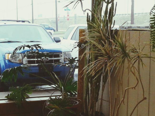 Car Transportation Mode Of Transport Land Vehicle City Palm Tree No People Day