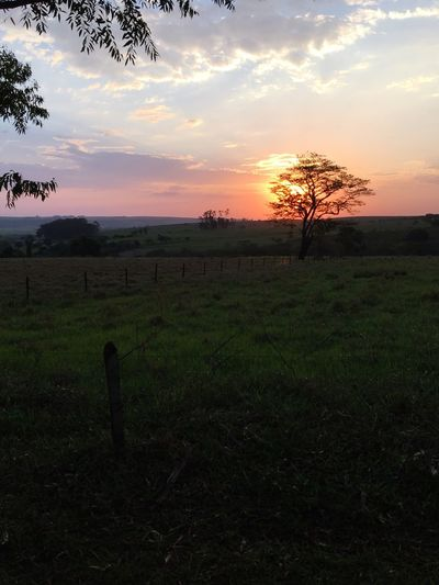 Sunset Nature Field Landscape Beauty In Nature Tranquil Scene Sky Outdoors No People Brotas