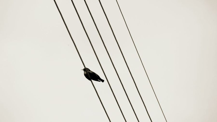 The bird and the electric cables.... Bird Photography Birdview Electric Lines Black And White Blackandwhite Photography Taking Photo Takingphotos Taking Pictures Electricline Taking Photos