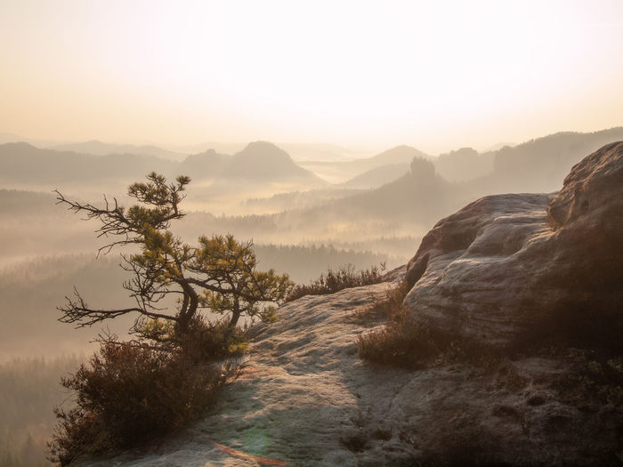 Lone pine over a cliff in the mountains at dawn. landscape of natural wild nature in morning sun