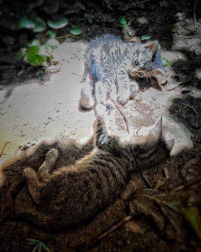 Cats 🐱 Cat♡